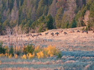 Mason Creek Herd