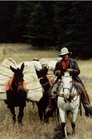 Montana pack horse